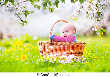 Baby in a basket in apple garden - Adorable happy smiling...