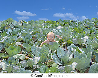 baby in cabbage