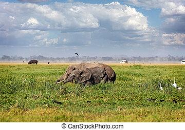 baby, kenia, amboseli, moeder, elefant
