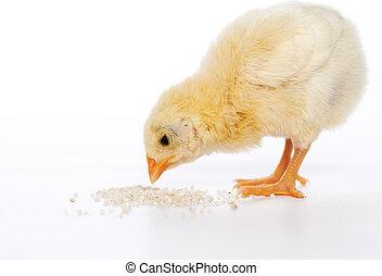 baby kip, hebben, maaltijd