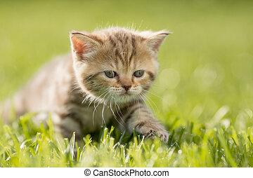 Baby kitten cat in green grass