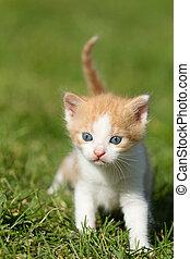 Baby kitten on the green grass