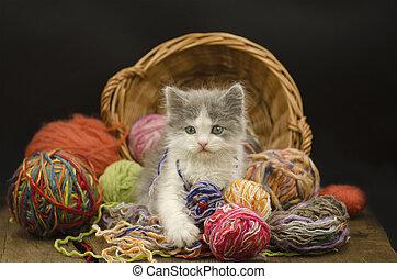 Baby kitten playing with ball yarn