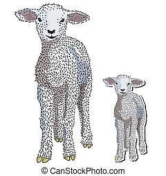 Hand drawn baby lamb standing