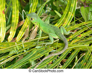 Baby Lizzard - This is a photo of a baby lizzard sitting on...