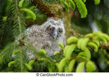 Baby Long-eared owl owl in the wood, sitting on tree trunk ...