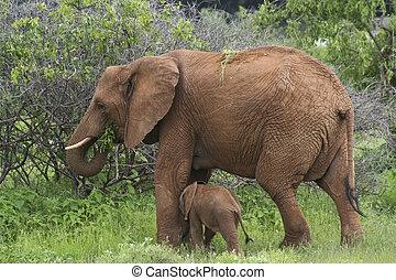 baby, moeder, 4, elefant