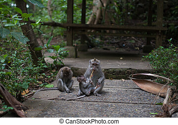 Baby monkey is feeding its mother on a walkway in the jungle