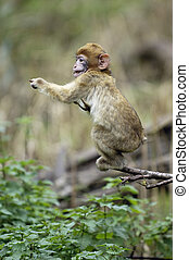Baby Monkey on Tree