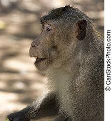 baby-monkey, peu, singe, forêt