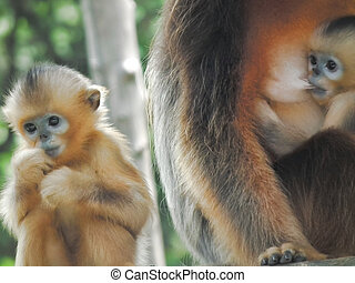 baby monkey with mother 5