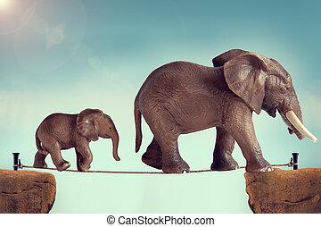 baby, mor, spänd lina, elefant