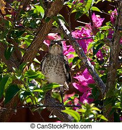 Baby Northern Mockingbird in tree