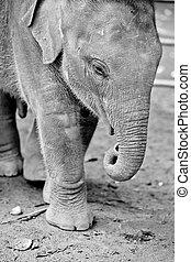 Baby of elephant