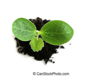 Baby Plant - Baby plant in soil