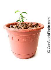 Baby plant in small flower pot