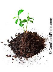 Baby plant in soil