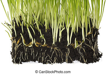 baby plant with root system