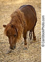 baby, pony