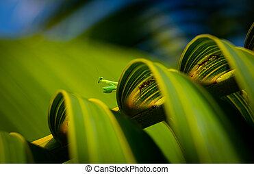 Baby praying mantis peering over palm tree frond