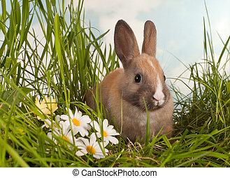 Baby rabbit and daisies