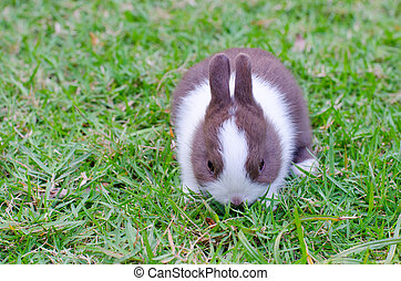 Baby rabbit in green grass