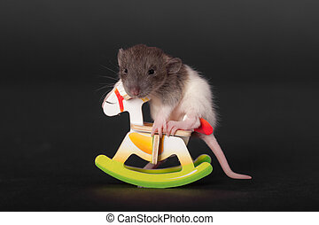baby rat on a toy