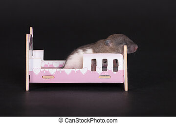 baby rat sleeping in crib