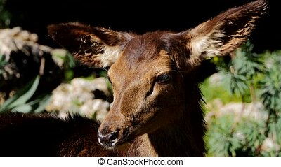 Baby roe deer in the forest
