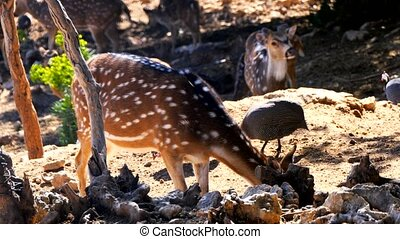 Baby roe deers in the forest