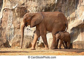 baby, säugling, elefant, mum., afrikanisch
