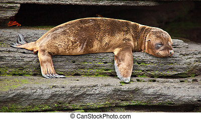 Baby sea lion in Galapagos