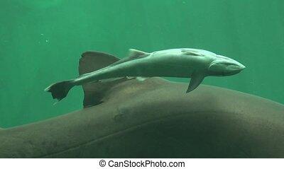 Baby Shark Marine Life