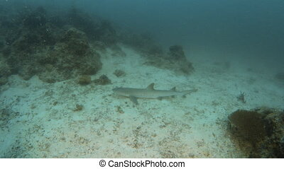 Baby shark underwater - A full shot of a baby shark...
