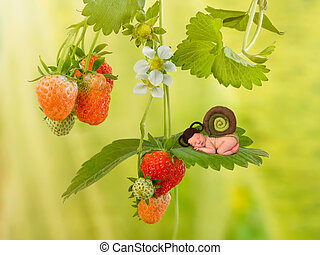 Baby snail on strawberry plant