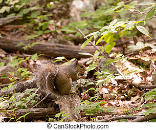 Baby squirrel in forest