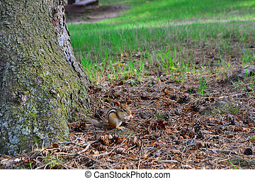 Baby Squirrel in the park, spring time