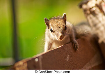 Baby Squirrel Posing