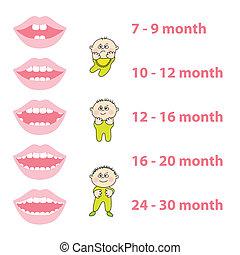 baby-teeth - how to grow your baby's teeth