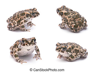 Baby toad set