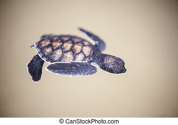 Baby turtle in a farm