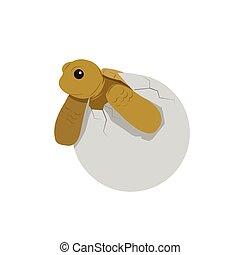 baby turtle vector