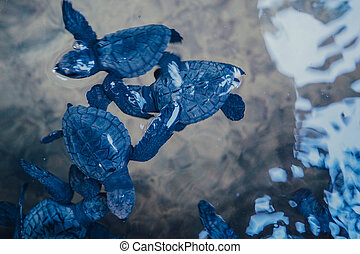 Baby turtles in a pond