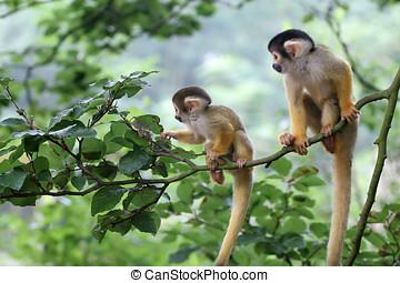 baby, uit, squirrelmonkey, twee, avontuur