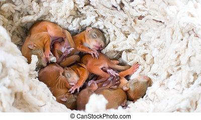 baby wild eichh rnchen kind nest baum eichh rnchen stockbild suche fotos und foto. Black Bedroom Furniture Sets. Home Design Ideas