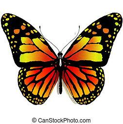 bac, witte , vlinder, vrijstaand