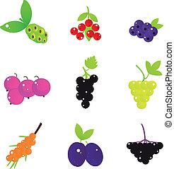 bacche, frutta, estate, isolato, set, bianco