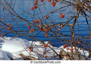 bacche rosse, contro, fiume wisconsin