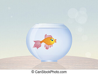 bacia goldfish