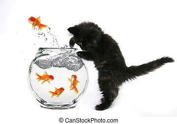 bacia peixes, pular, pegando, gatinho, goldfish, saída
